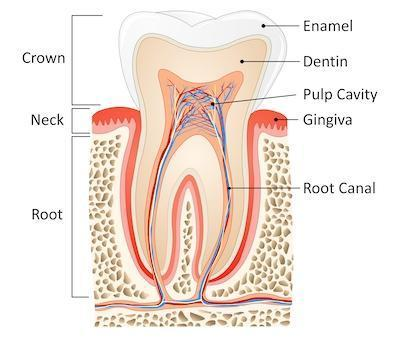root canal | root canal therapy | midland park